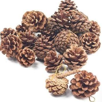 Decorative Pine Cones Novemeber Decorations